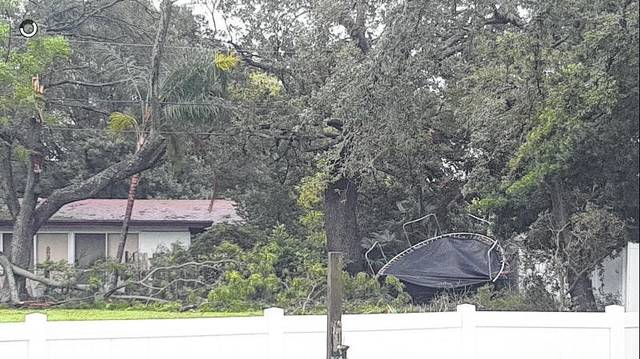 Photo courtesy Sarah VanAsdale Neumann  This trampoline had just purchased a few months ago by Sarah's son, who lives in Clearwater. It ended up wrapped around a neighborhood tree.