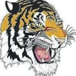 Tigers swim squads host Whippets, Indians
