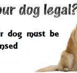 Dog license renewals due Jan. 31