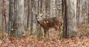 Column: Ohio Wildlife Council approves regulations